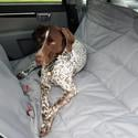 Hammock Car Seat Pet Protector, Gray