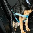 Pet Seat Belt Tether